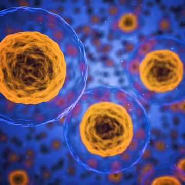 Einblicke in die Mikrobiologie